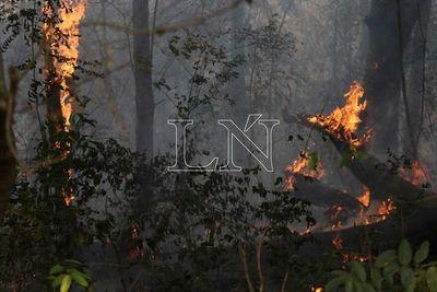 Infona elaborará informe sobre áreas afectadas por incendios