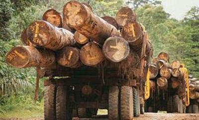 Fepama condena invasión y hostigamiento permanente de grupo campesino a industria forestal en Alto Paraná