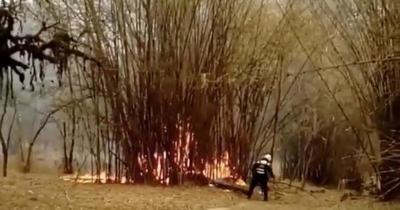 Reportan principio de incendio en el Jardín Botánico de Asunción