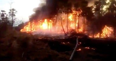 La Nación / Vegetación de Atyrá quedó con importantes daños tras voraz incendio