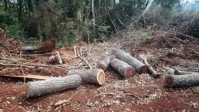 Detectan DEFORESTACIÓN en la zona de Minga Guazú