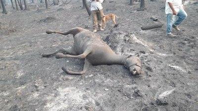 Crónica / Primeras víctimas: un abue y su caballo