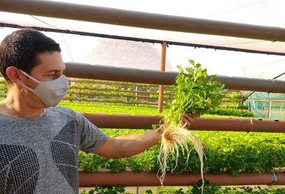 Huerta hidropónica más grande del país se suma a oferta turística de Cordillera