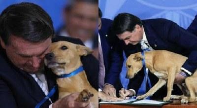"""Bolsonaro promulgó una ley contra el maltrato animal e hizo """"firmar"""" a un perro"""
