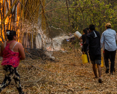 """Ambientalista revela los tres ingredientes que crean la """"fórmula perfecta"""" para los incendios"""