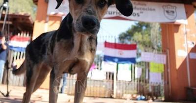 La Nación / Aplicación móvil ayuda a adoptar, buscar y encontrar mascotas dentro del país