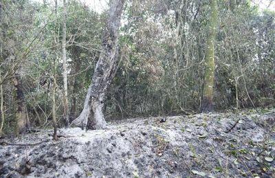 Más de 3.000 hectáreas afectadas en  zona de la reserva San Rafael, Itapúa