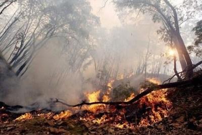 Alto Paraguay: Imputan a tres personas por delitos contra el medio ambiente