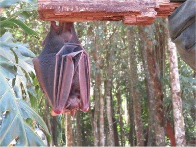 El murciélago: Un animal con mala reputación, pero clave para el ecosistema