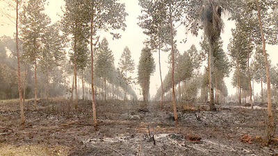 Sector forestal reporta pérdidas por las invasiones e incendios