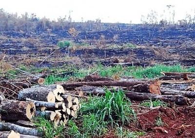 Ausencia del Estado y corrupción del Gobierno aceleran puja sobre valiosos recursos naturales en peligro
