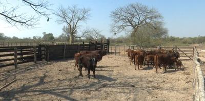 Anhelan una pronta recuperación de la producción chaqueña ante una dura sequía