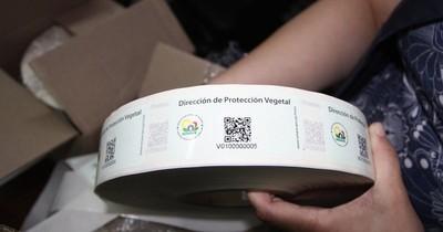 La Nación / Alertan sobre paquetes de semillas remitidos del exterior