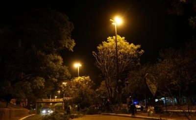 Municipalidad de CDE insta a evitar poda y tala de árboles