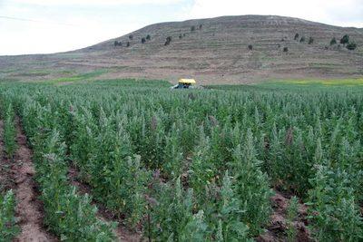Advierten de una posible crisis alimentaria en Perú por grandes pérdidas en el campo