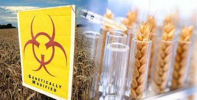 Argentina se convierte en el primer país en aprobar comercialización de trigo transgénico