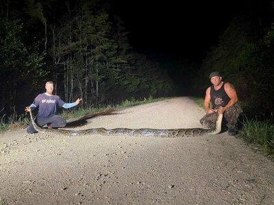 Cazadores capturan una serpiente pitón de más de 6,1 metros de largo