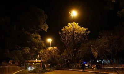 Pasó época estacional, y recomiendan no podar más ni talar árboles en CDE – Diario TNPRESS