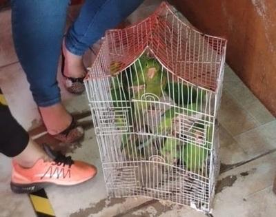 Rescatan 11 aves en peligro de extinción