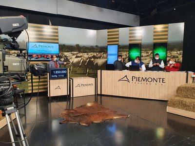 Mañana sábado, Piemonte vende más de 900 cabezas de invernada por televisión