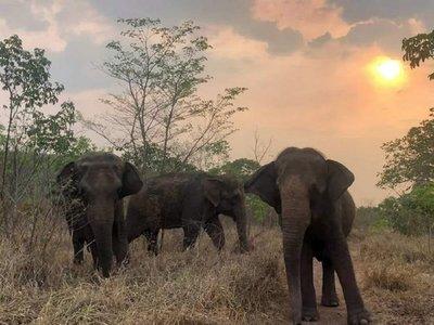 Un incendio forestal se aproxima al Santuario de Elefantes de Brasil