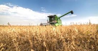 La Nación / Agricultores sembraron y hoy están preocupados