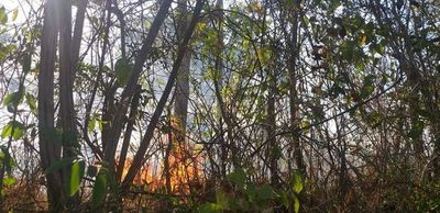 Reportan incendio en serranías de Altos