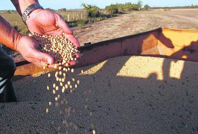 El precio de la soja mantiene tendencia alcista, en Paraguay cotiza US$ 370 por tonelada