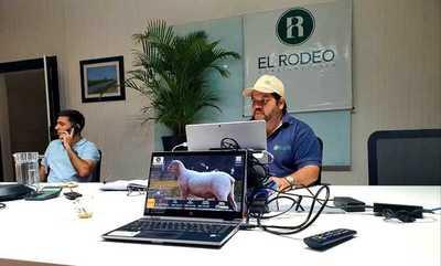 Hoy lunes, El Rodeo remata online reproductores ovinos Dorper y Santa Inés