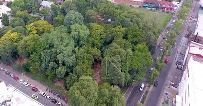 La Nación / Director de la municipalidad de Asunción promete echar solo los  árboles secos