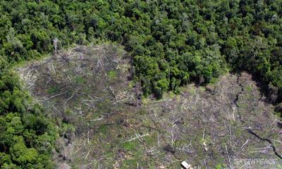 Proponen ley de «deforestación cero» indefinida en la Región Oriental