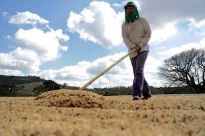 Brasil exportó en septiembre volumen récord de 3,79 millones de sacas de café