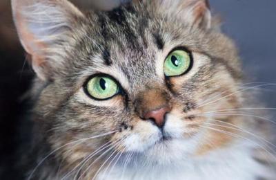 ¿Tu gato no te presta atención? Descubren la expresión facial correcta para comunicarse con los felinos
