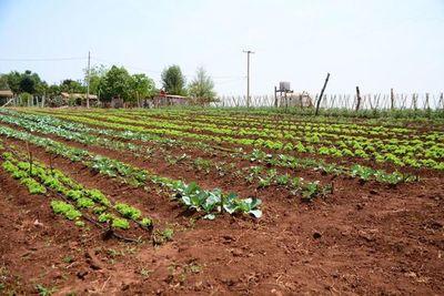 Veinte familias producen alimentos mediante huerta comunitaria en Ciudad del Este