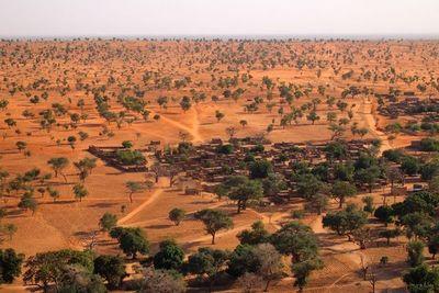 """Detectan millones de árboles """"invisibles"""" en el desierto del Sáhara"""