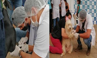 Realizan jornada de vacunación para perros y gatos – Prensa 5