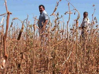 Ansiada lluvia alienta a productores de soja