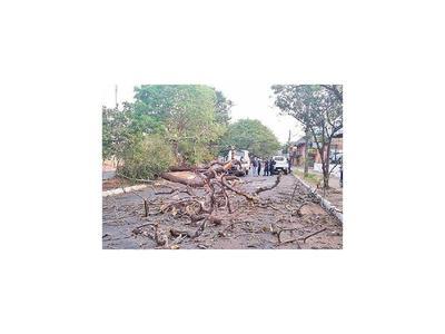 Temporal deja árboles caídos en varias ciudades de Central