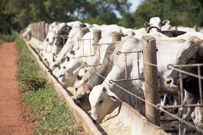 Triplican la producción y aumentan ingresos adoptando buenas prácticas ganaderas