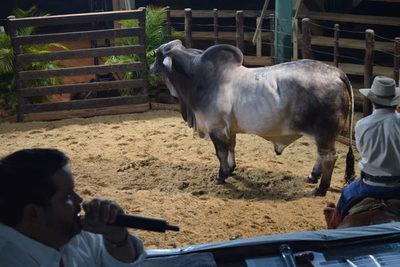 El Rodeo comercializó el 100% de la oferta de Cobaner, Fortaleza y La Bellaca