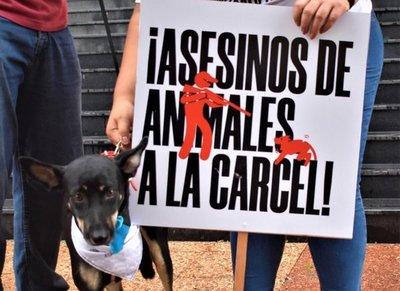 Proyecto pretende elevar a 8 años de cárcel el maltrato animal