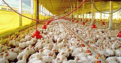 La Nación / Exportaciones de carne y menudencia de origen aviar crecieron 30,6% a setiembre
