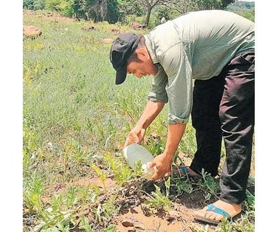 1.200 hectáreas de sandías se perdieron en Altos ante falta de sequía