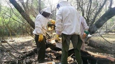 Continúan trabajos de fortalecimiento de apicultora en comunidades ribereñas
