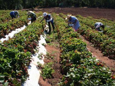 Misiones: Verifican proyectos enfocados en seguridad alimentaria de familias rurales