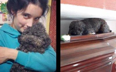Conmueve el amor de Benito, el perro que visita a su dueña que murió hace 4 años