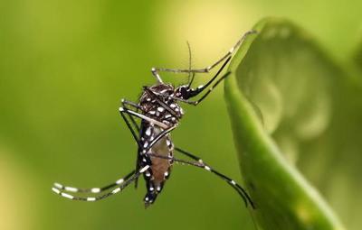 Advierten que se acerca la época del dengue e instan a prevenir y eliminar criaderos