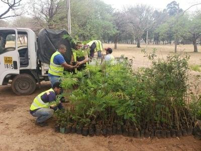 Plantarán 100 árboles como parte del plan de compensación ambiental del Corredor Vial Botánico