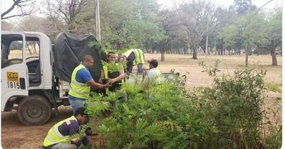 La Nación / Plantarán 100 árboles en compensación ambiental por el Corredor Vial Botánico