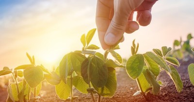 La Nación / Luego de las recientes lluvias la siembra de cultivos se procesa a un ritmo acelerado